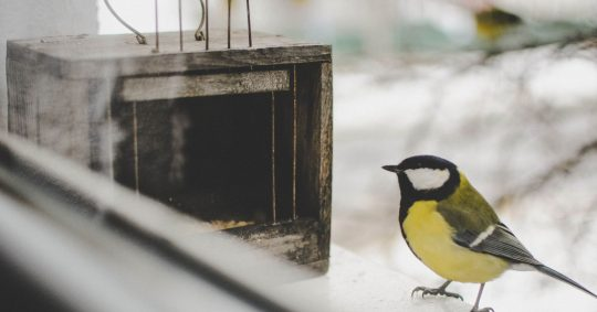 Titta på fåglar hemma