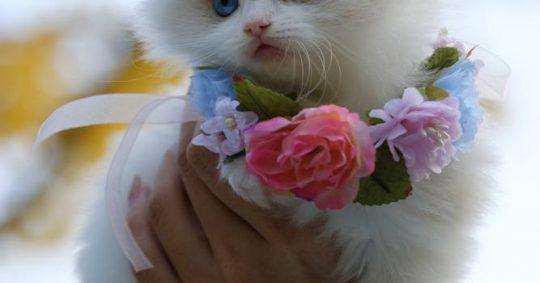 Kattpensionat - Ett lyxigt alternativ till kattvakt